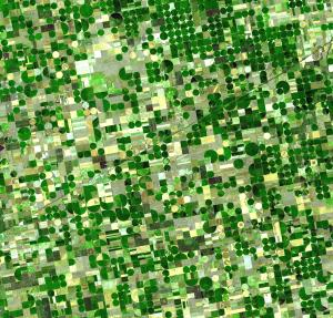 Circular crop fields in Kansas, characteristic of center pivot irrigation. This file is in the public domain because it was solely created by NASA.