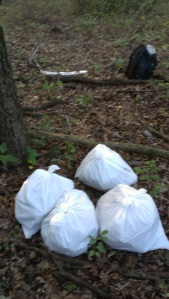 Collected at Thorn Creek Nature Preserve, Park Forest, Illinois, on 9/3/2012.