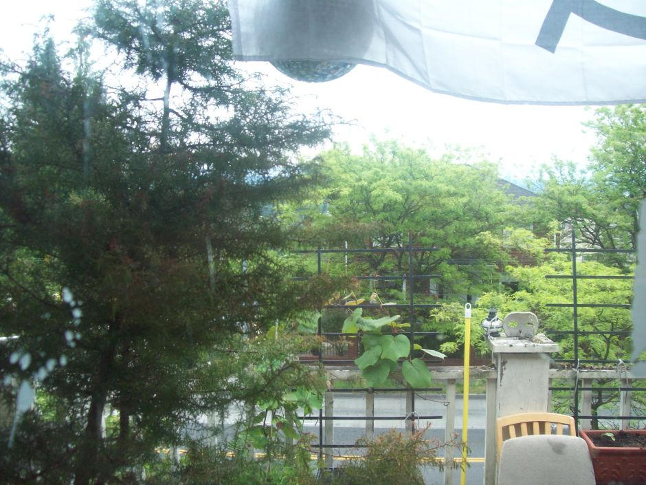 View from my window, 2009