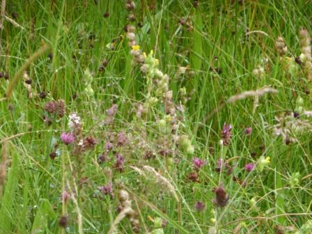 Meadows I