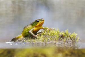 Photograph by Alejandro Arteaga, Tropical Herping (via National Geographic)