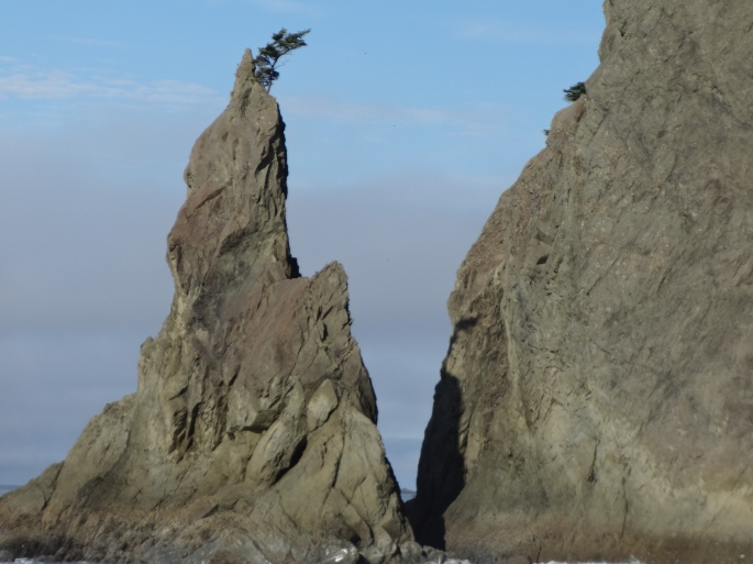 Life finds ways. (Tree on sea stack, Rialto Beach. Fjothr Lokakvan, 2015)