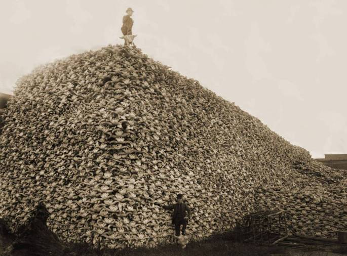 Collected Buffalo Skulls, 1870. The U.S. Government and private corporations encouraged the slaughter of Buffalo to starve First Nations peoples.