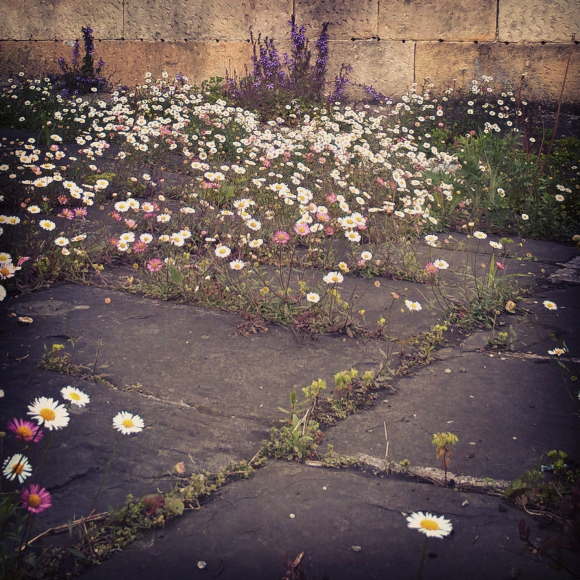 flower concrete
