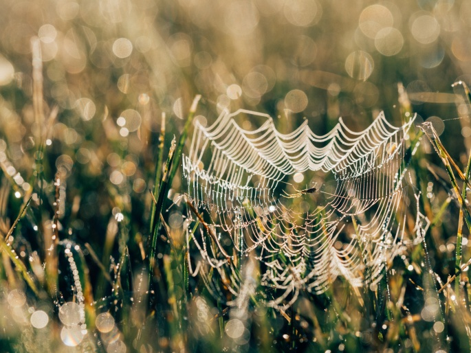 spidersweb-unsplashcom
