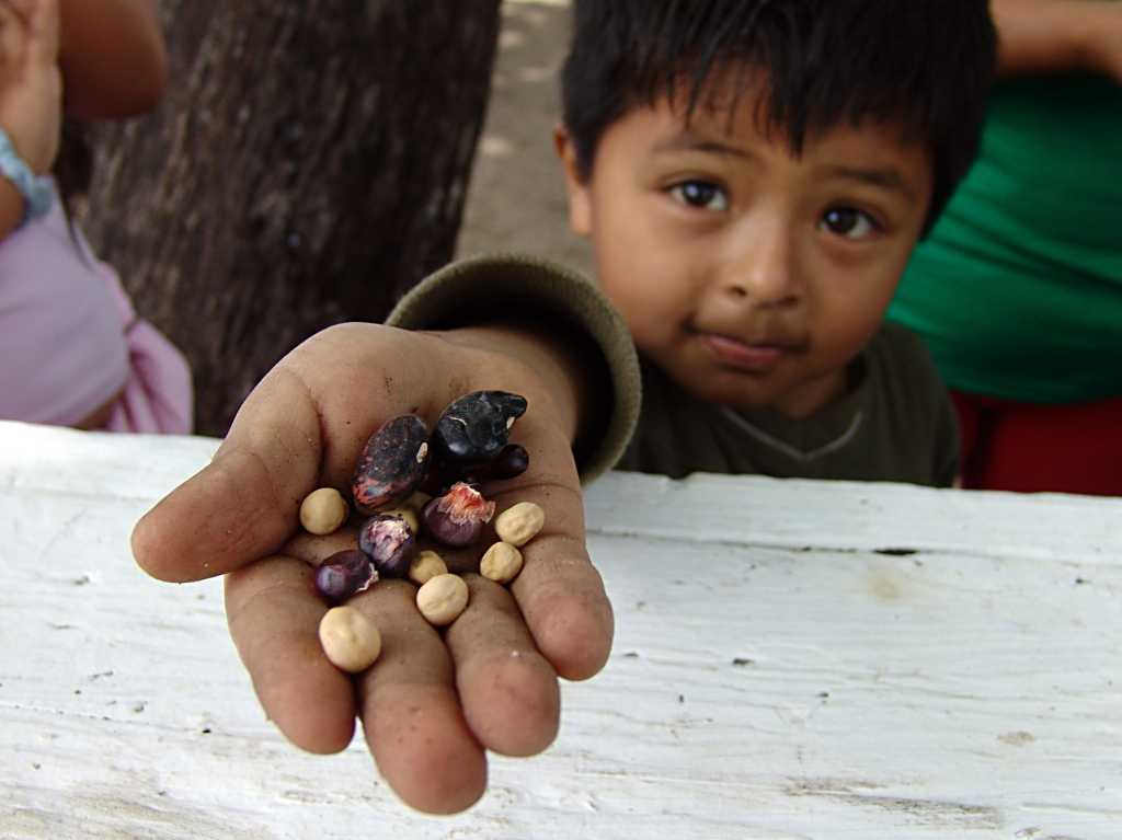 The son of a farmer holding seeds, by Jonathan McIntosh - Own work, CC BY-SA 3.0.