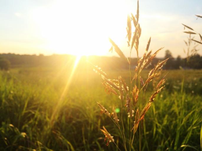 sunrise_mariotrunz_viaunsplash