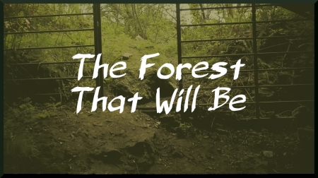 Forest Title