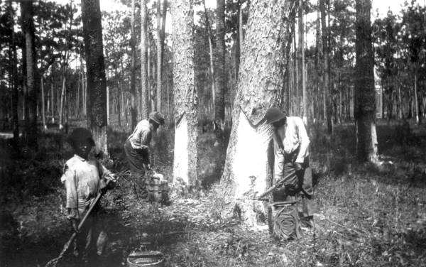 turpentine_workers_in_florida