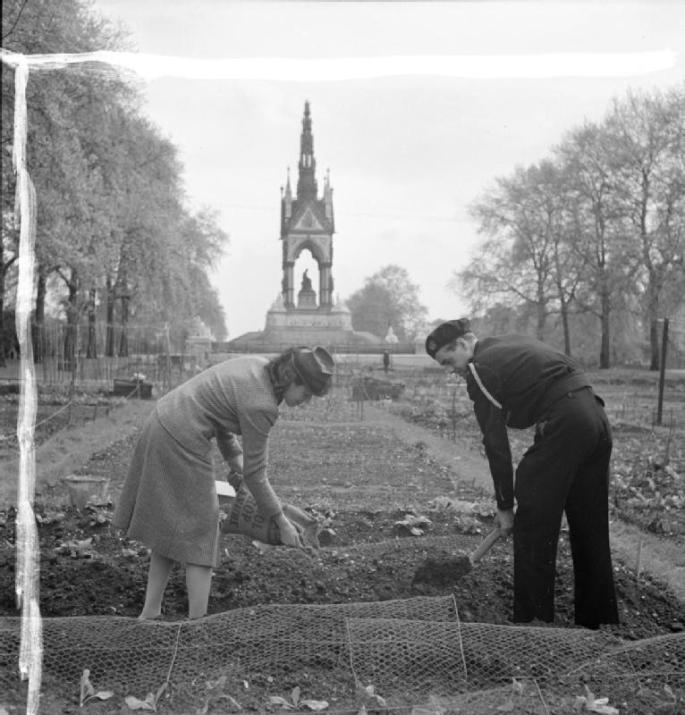 dig_for_victory-_working_on_an_allotment_in_kensington_gardens_london_1942_d8334