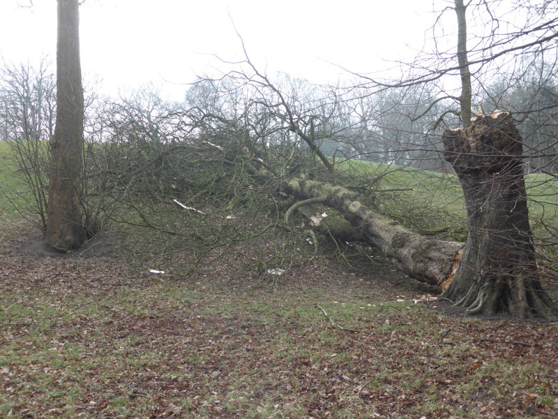 Tree felled in Penwortham after the Beast from the East