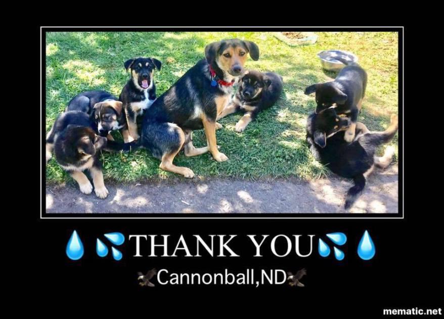 Dakota and her puppies say,