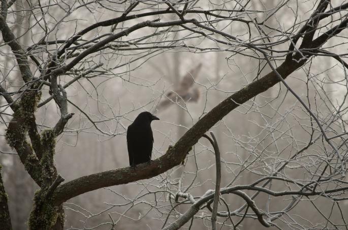 crow-2397589_1920.jpg