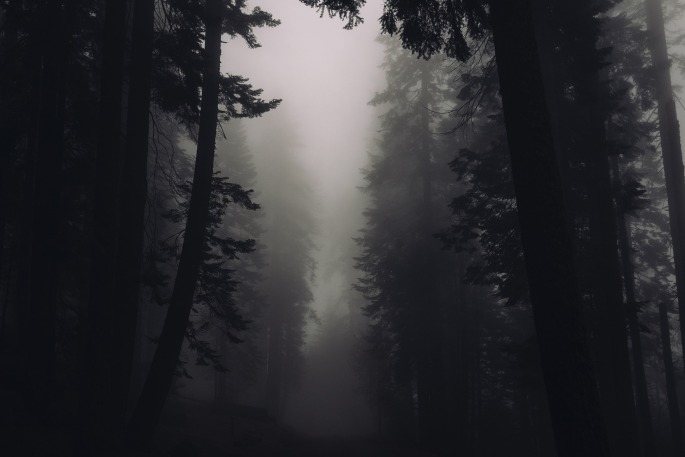 trees-2616706_1920